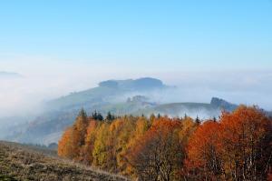 autumn-1548642_960_720