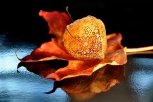 autumn-1713232_960_720