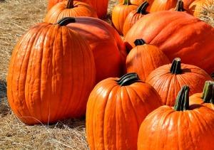 pumpkins-1572864_960_720